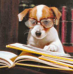 Dog with glasses reading